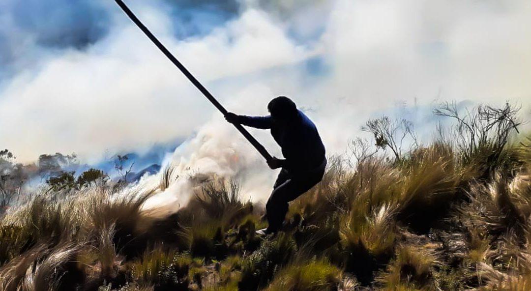 Fuego amenaza vida silvestre en Checa